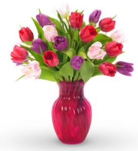 tulips red vase